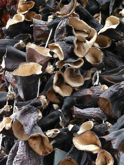 Champignons noirs ou oreilles de judas